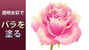 透明水彩絵の具で薔薇を塗る【動画付】